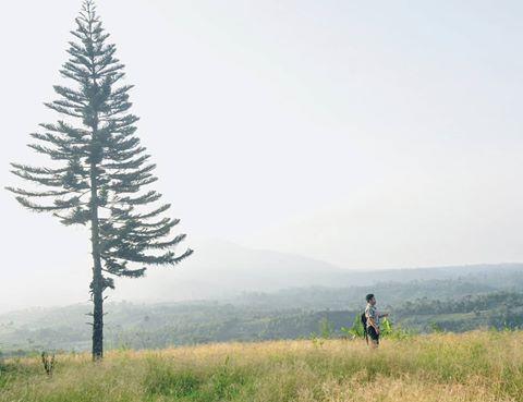 Rasakan Liburan Seru Yang Spektakuler Di Rumah Pohon Laing Park Sumatera Barat Destinasi Travel Indonesia